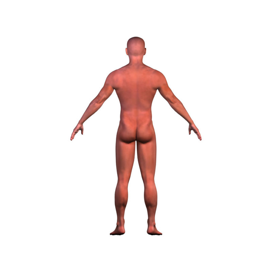 Malla de base masculina royalty-free modelo 3d - Preview no. 5
