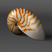Nautilus Shell 3d model