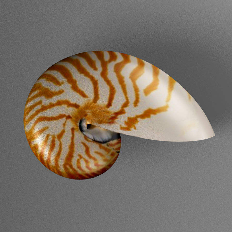 Shell Nautilus royalty-free 3d model - Preview no. 7