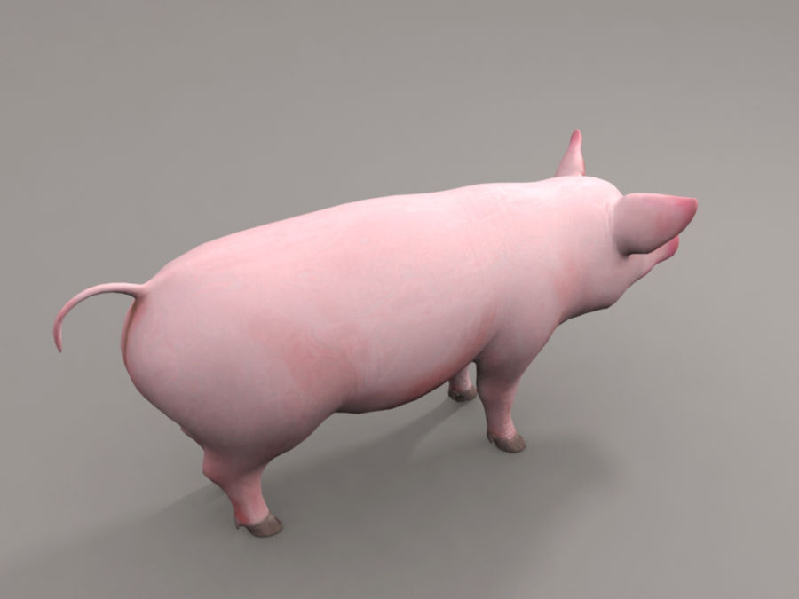 Pig royalty-free 3d model - Preview no. 4