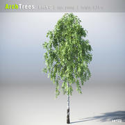 ArchTrees Birch (C) 3d model