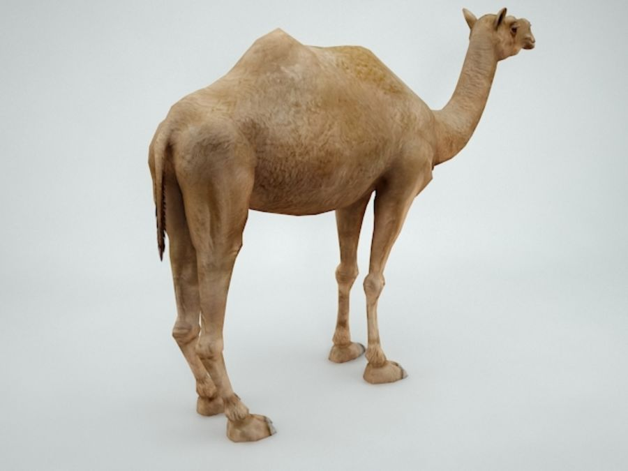 camel royalty-free 3d model - Preview no. 6