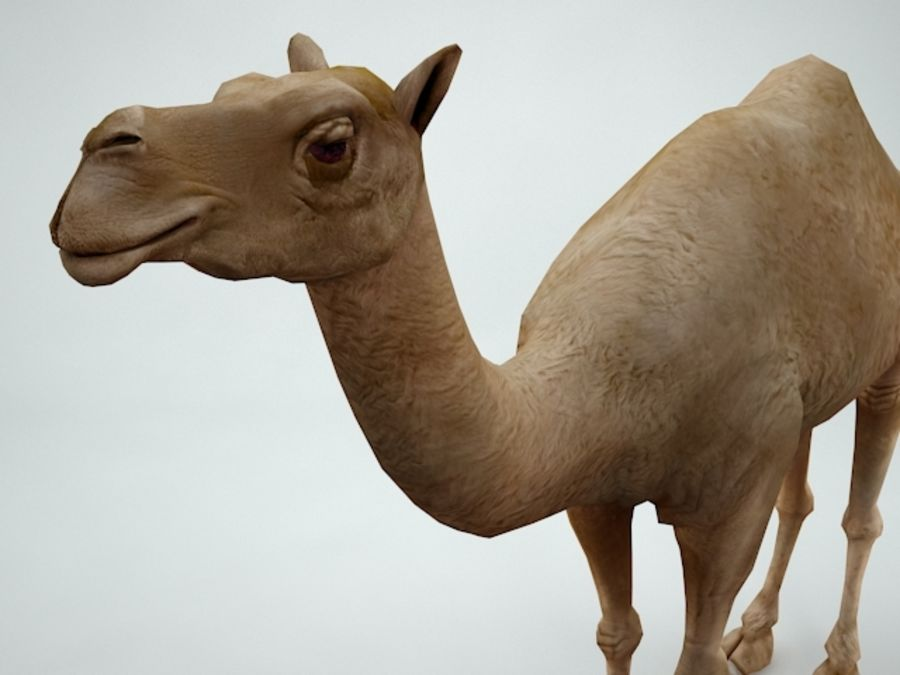 camel royalty-free 3d model - Preview no. 8