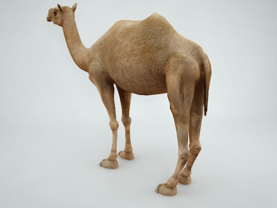 camel royalty-free 3d model - Preview no. 4