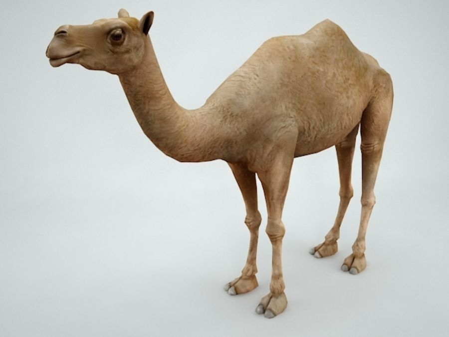 camel royalty-free 3d model - Preview no. 1