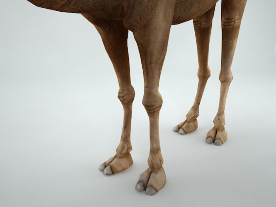 camel royalty-free 3d model - Preview no. 9
