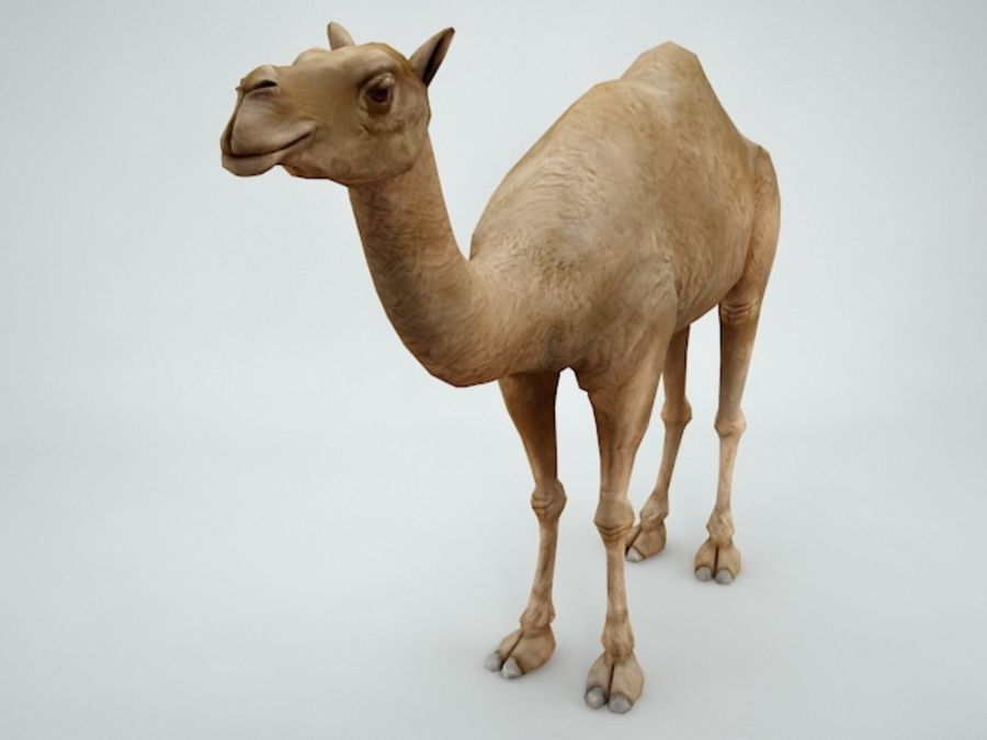 camel royalty-free 3d model - Preview no. 2
