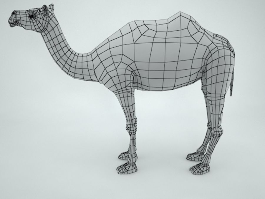 camel royalty-free 3d model - Preview no. 10