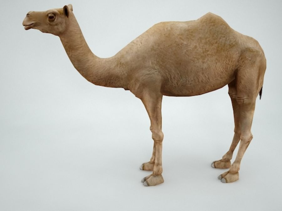 camel royalty-free 3d model - Preview no. 3