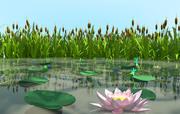 Болотные Растения 3d model