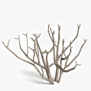 Dead Bush 2 3d model