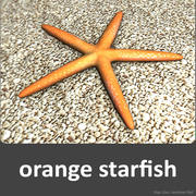 Orange starfish 3d model
