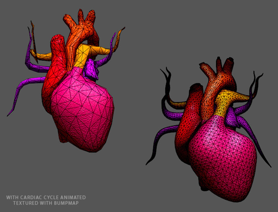 Heart Low High Poly royalty-free 3d model - Preview no. 2