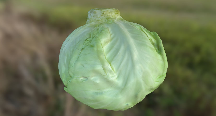 High Poly Cabbage royalty-free 3d model - Preview no. 7
