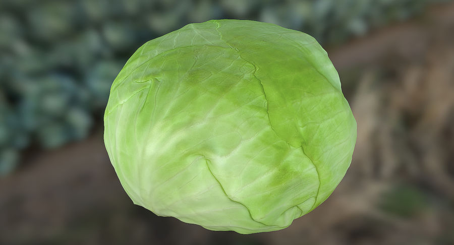 High Poly Cabbage royalty-free 3d model - Preview no. 2