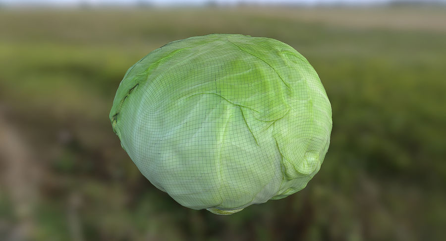 High Poly Cabbage royalty-free 3d model - Preview no. 8