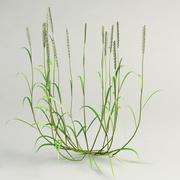 couch grass Elytrigia repens 3d model