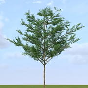 Tropical Almond ( Terminalia catappa2 ) 3d model