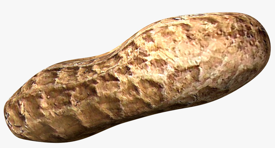 Roasted Peanut royalty-free 3d model - Preview no. 1