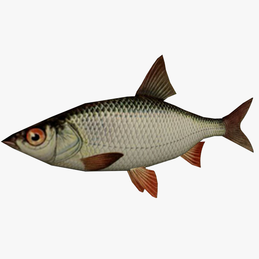Low Poly Realistic Fish 3d Model 2 Unknown Obj Fbx Dae