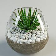 haworthia  fasciata cactus 3d model