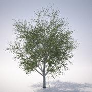 Drzewo RN 2 3d model