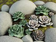 Graptoveria cactus 3d model