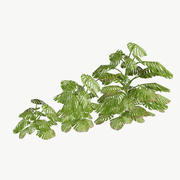 Monstera Pack Low Poly 3d model