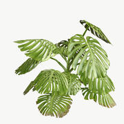 Monstera Type 1 Low Poly 3d model
