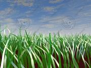 Grass scene with sky 3d model