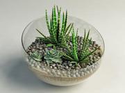 succulent cactus composition 3d model