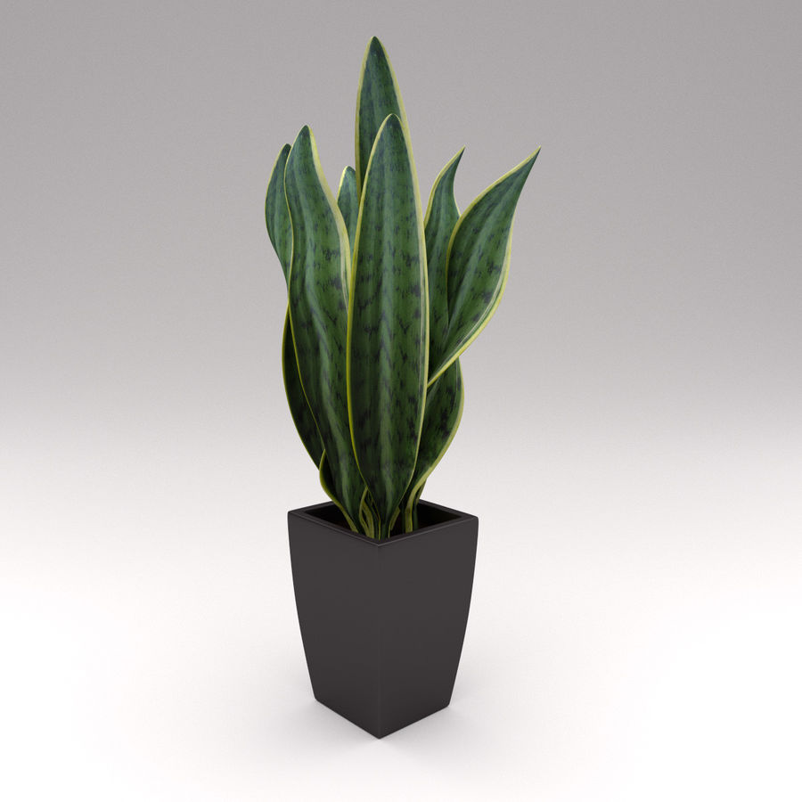 Ornamental Pot Plant royalty-free 3d model - Preview no. 3