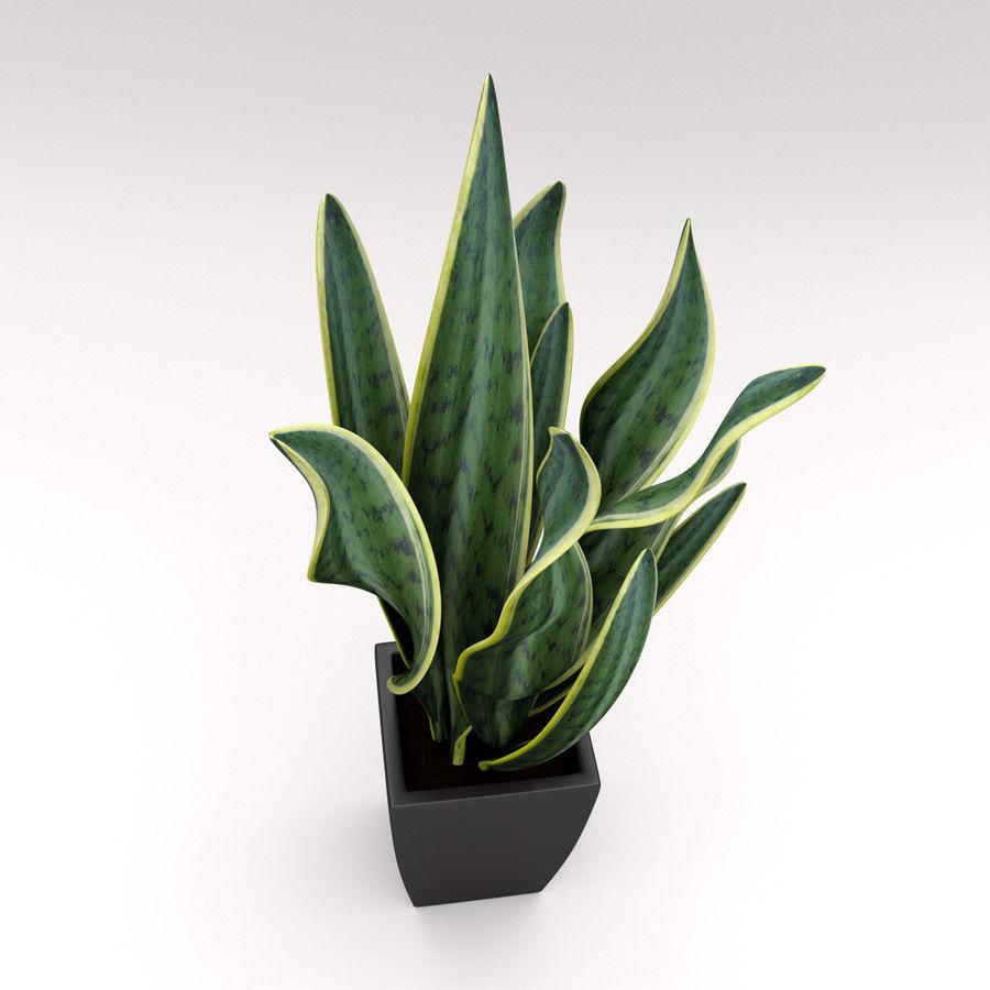 Ornamental Pot Plant royalty-free 3d model - Preview no. 2