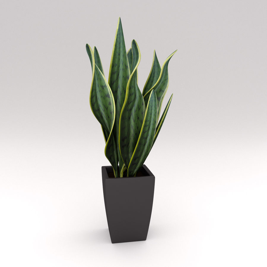 Ornamental Pot Plant royalty-free 3d model - Preview no. 1