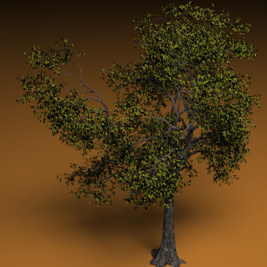 High + low poly trees royalty-free 3d model - Preview no. 2
