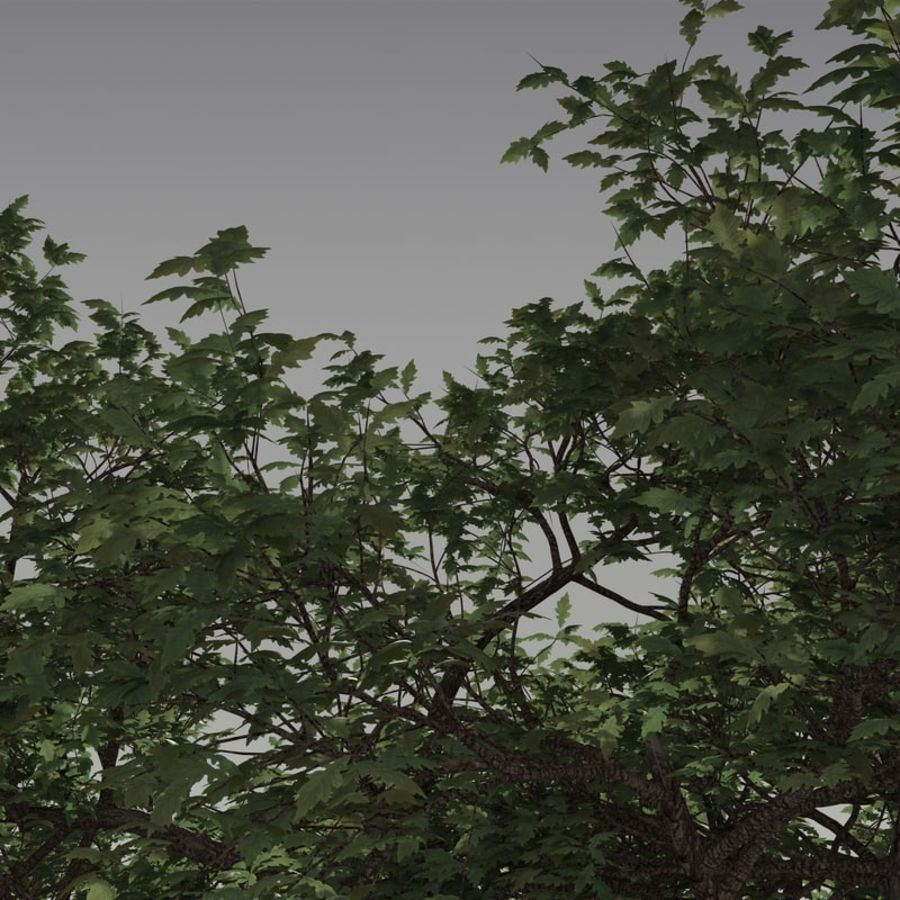 oak tree royalty-free 3d model - Preview no. 5