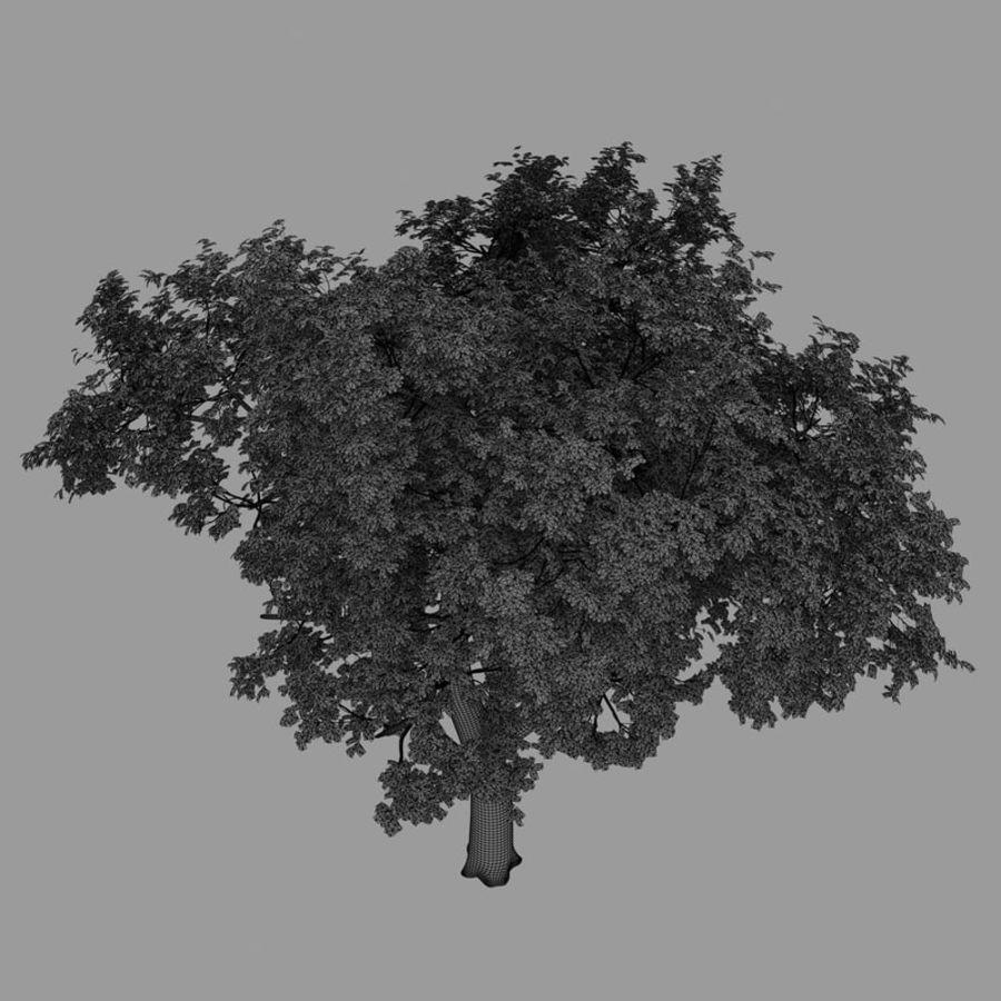 oak tree royalty-free 3d model - Preview no. 8