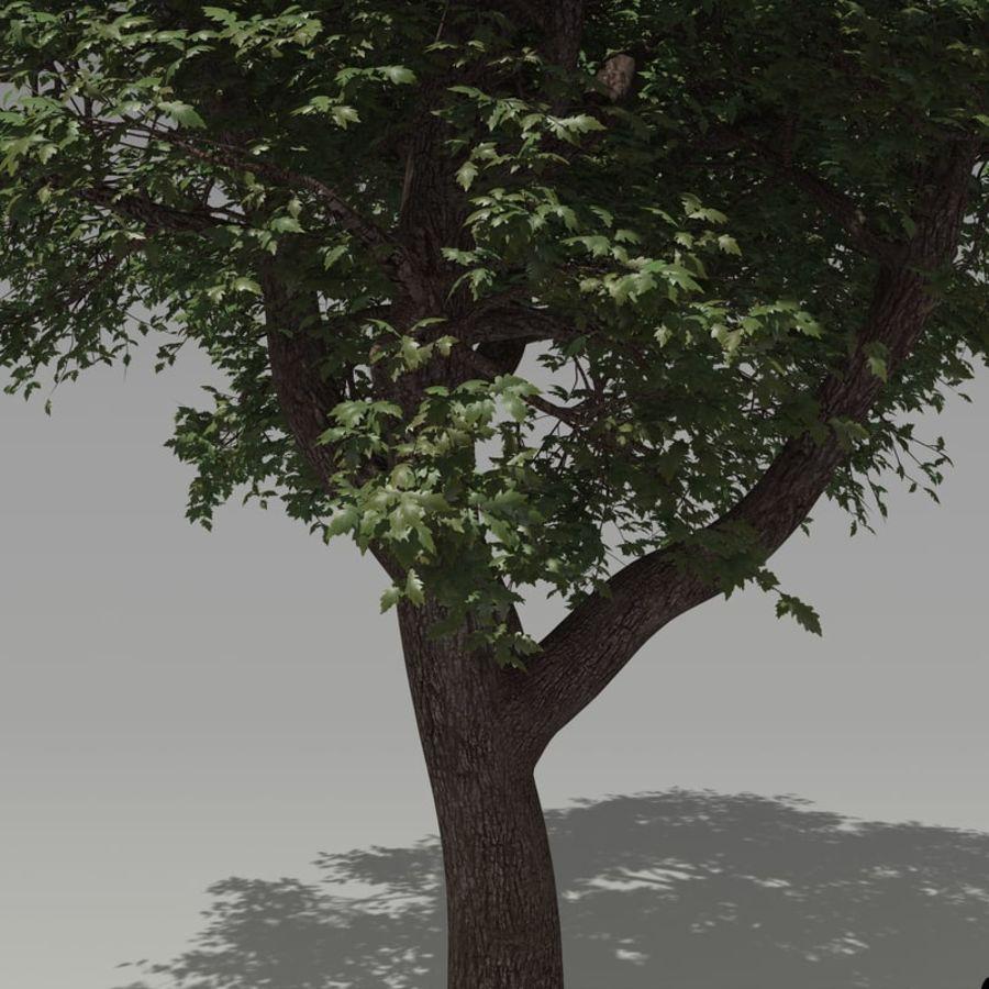oak tree royalty-free 3d model - Preview no. 2
