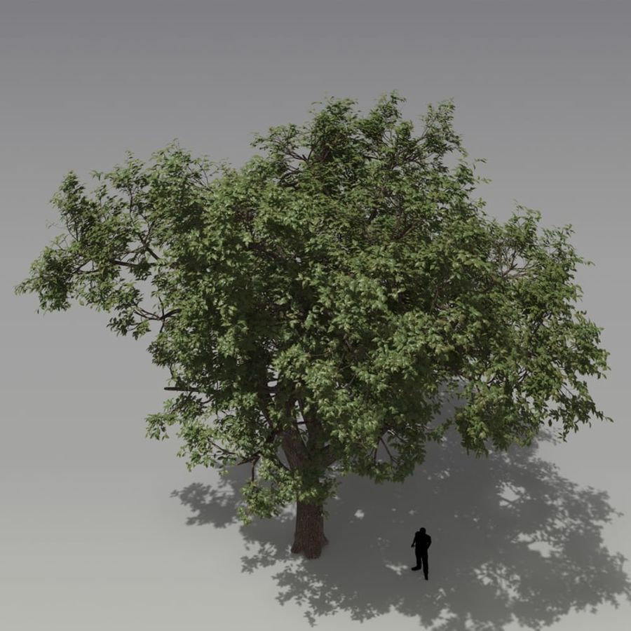 oak tree royalty-free 3d model - Preview no. 3