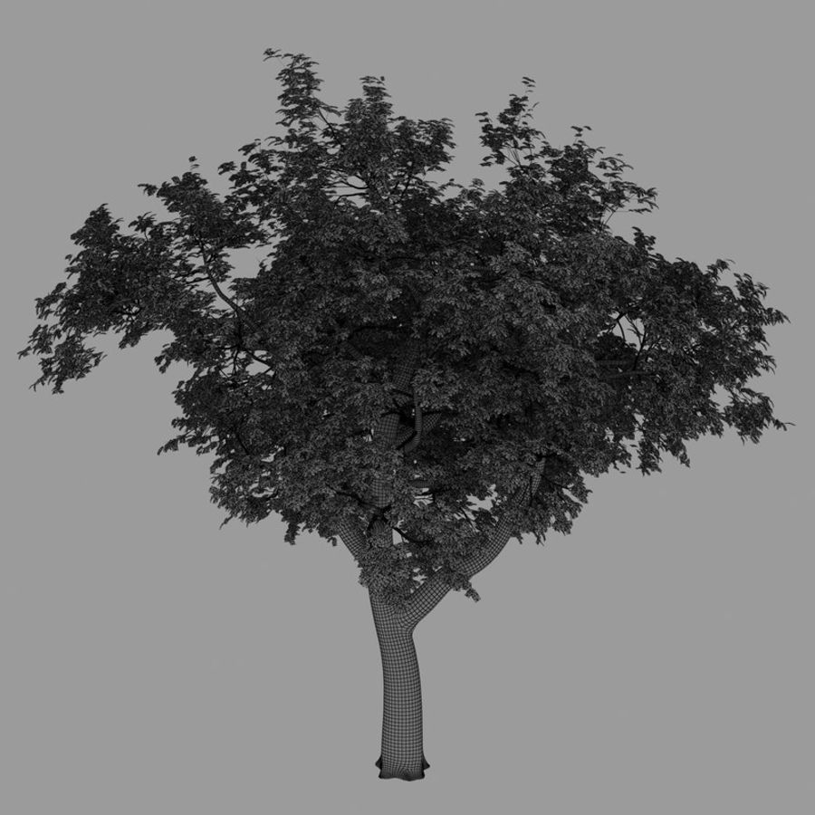 Eiche royalty-free 3d model - Preview no. 6