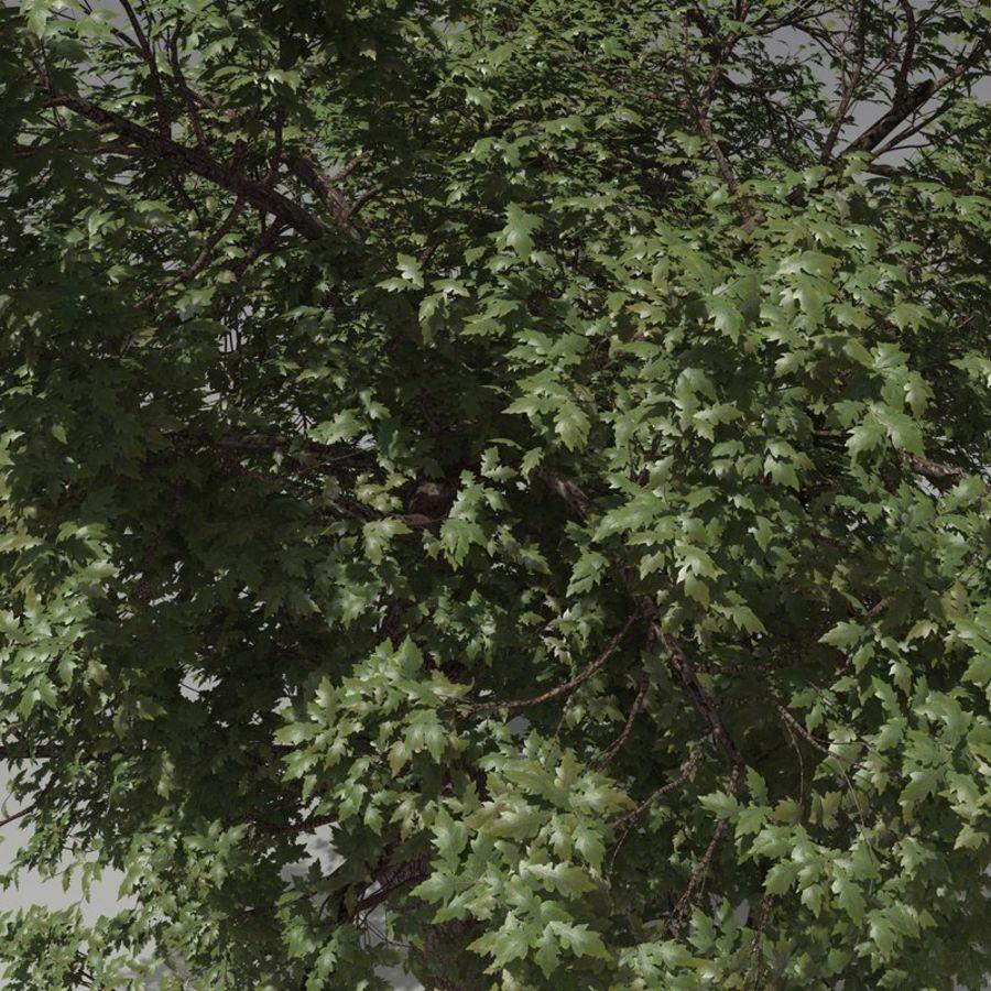 oak tree royalty-free 3d model - Preview no. 4