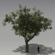 떡갈 나무 3d model