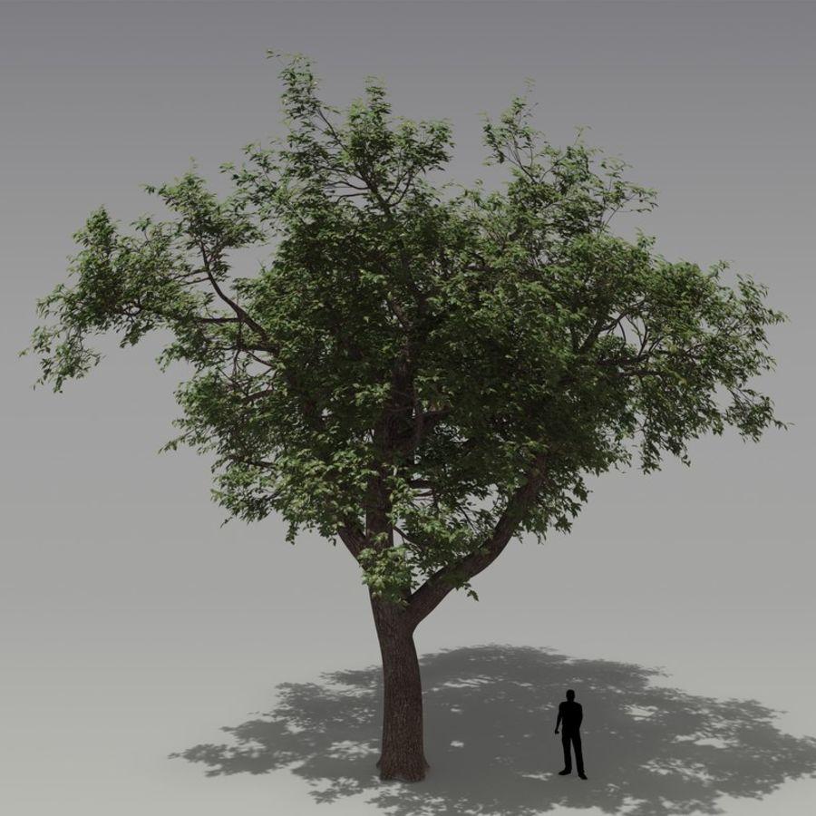 oak tree royalty-free 3d model - Preview no. 1