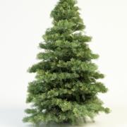 abies concolor 4,5 white fir 3d model