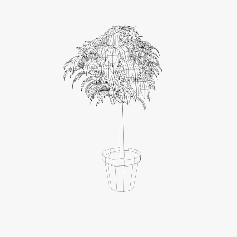 Indoor Plant royalty-free 3d model - Preview no. 4