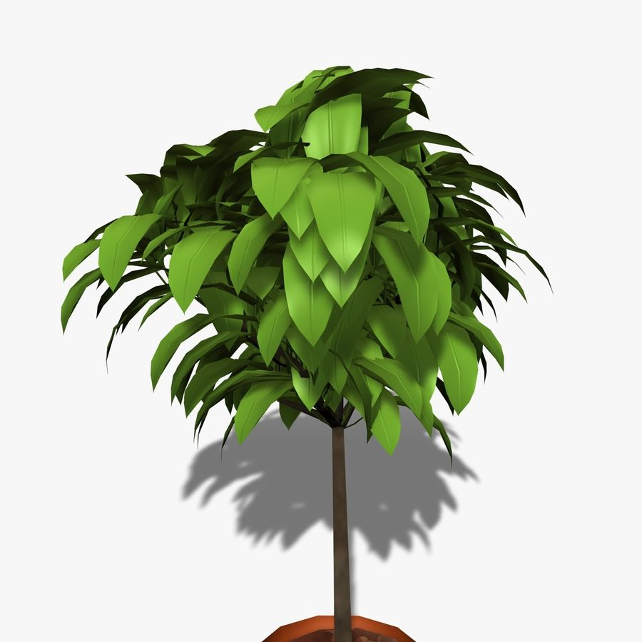 Indoor Plant royalty-free 3d model - Preview no. 6