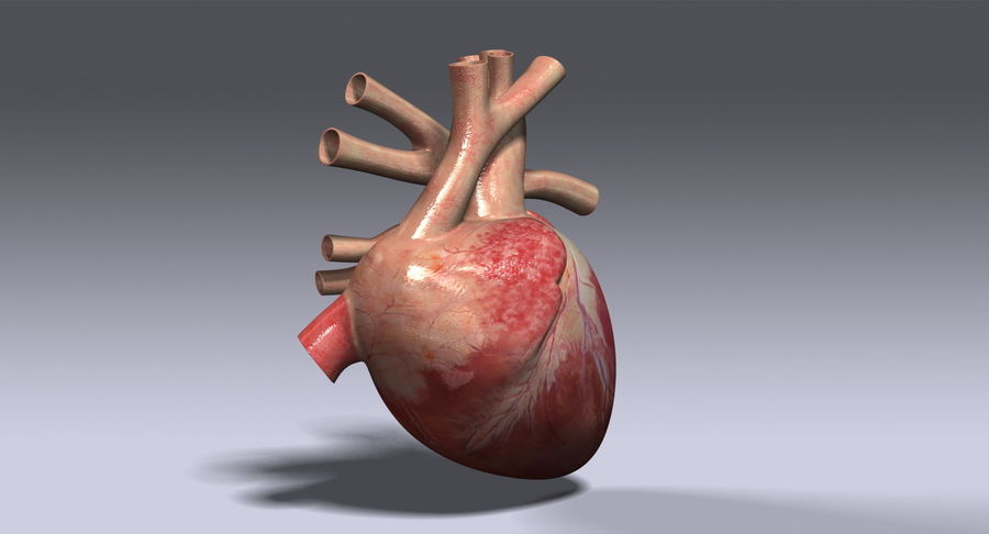 Human Heart royalty-free 3d model - Preview no. 3