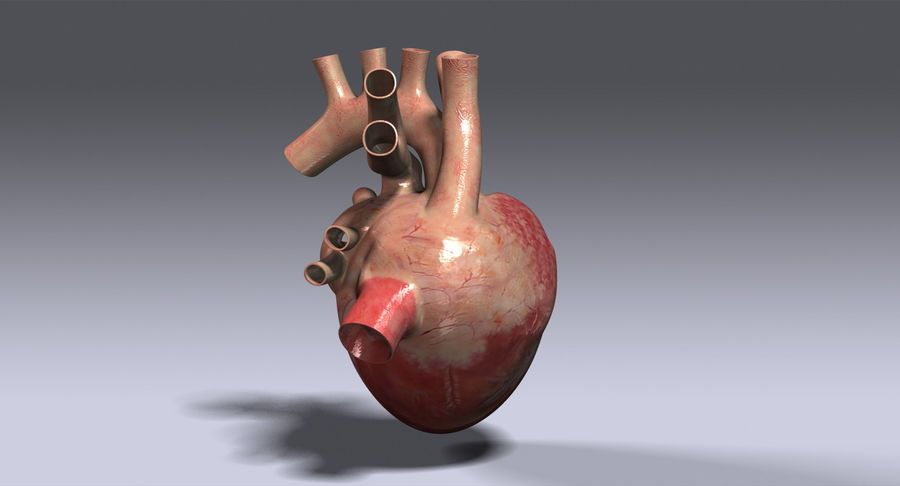 Human Heart royalty-free 3d model - Preview no. 4