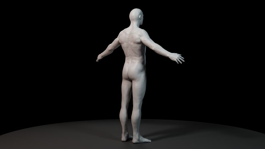 Modèle d'anatomie royalty-free 3d model - Preview no. 4