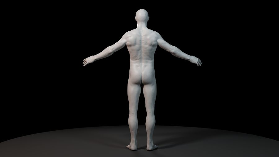 Modèle d'anatomie royalty-free 3d model - Preview no. 5